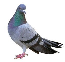 Bird Control
